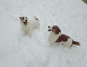 雪⑧.jpg