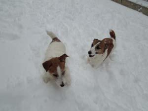 雪⑨.jpg